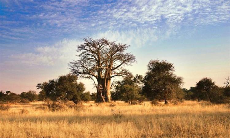 Ecoturismo in africa Great Limpopo Transfrontier Park
