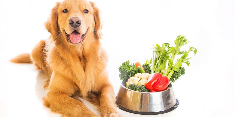 Alimentazione vegan o vegetariana per gli animali di compagnia