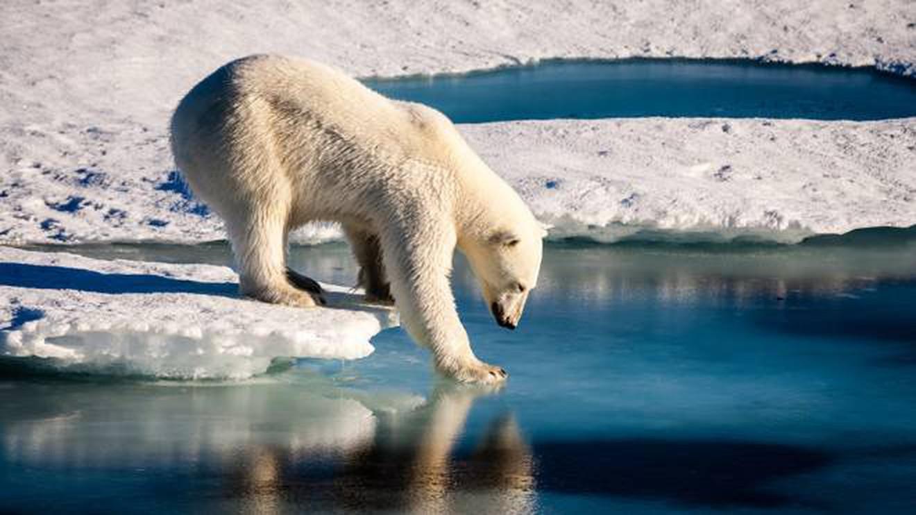 Entro il 2050 l'Artico potrebbe rimanere senza ghiaccio
