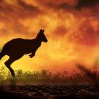 pericolo incendi australia