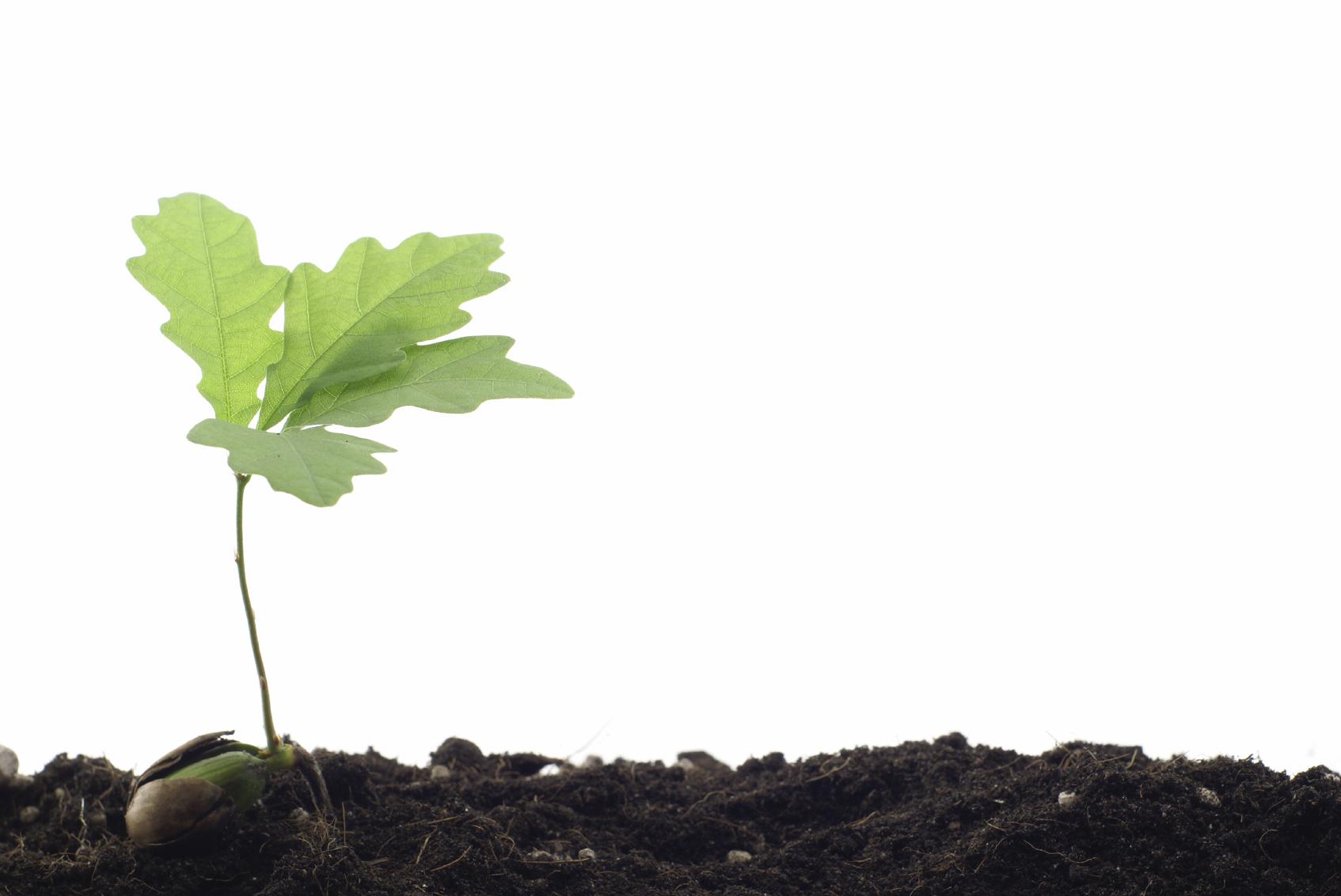 Biochar carbone vegetale