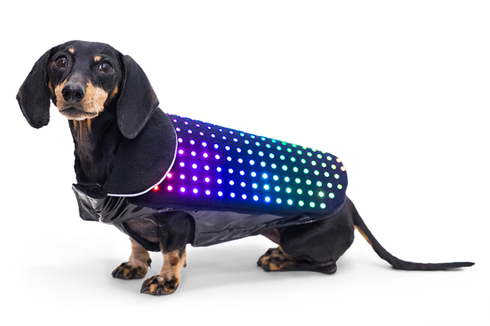 Disco Dog, la pettorina Led per cani che si controlla con lo smartphone