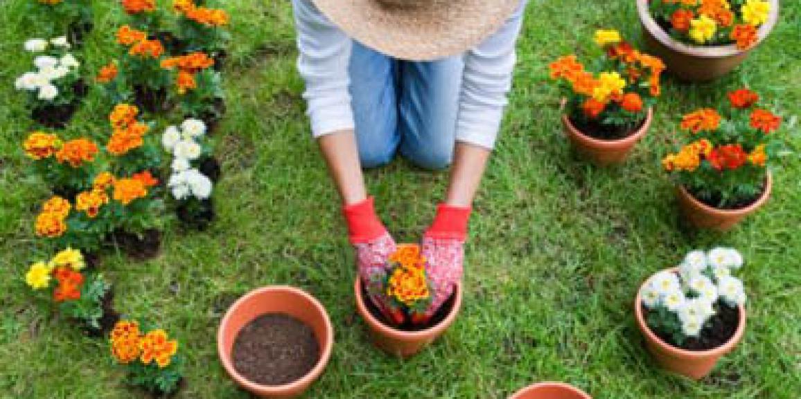 Hobby del Giardinaggio in Italia: E' di nuovo passione