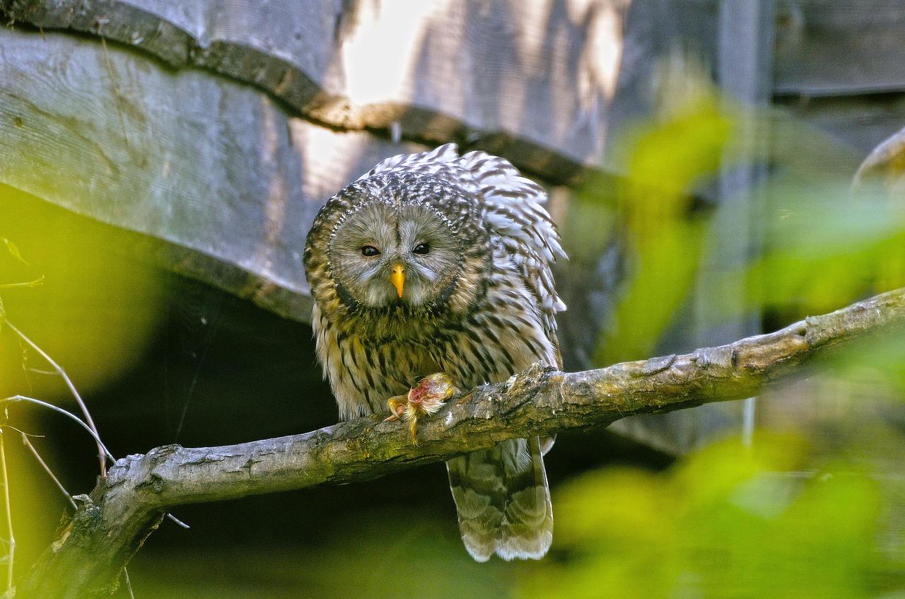 Gli effetti dell'inquinamento acustico sugli uccelli