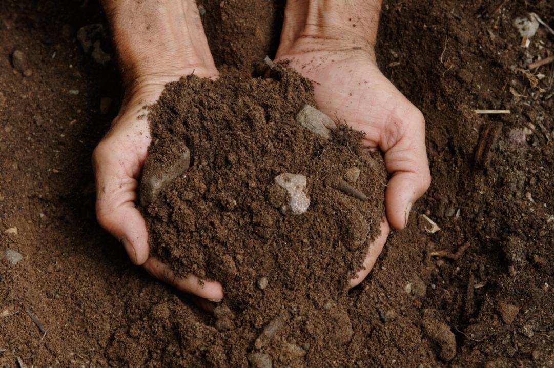 Monitoraggio della qualità biologica del suolo