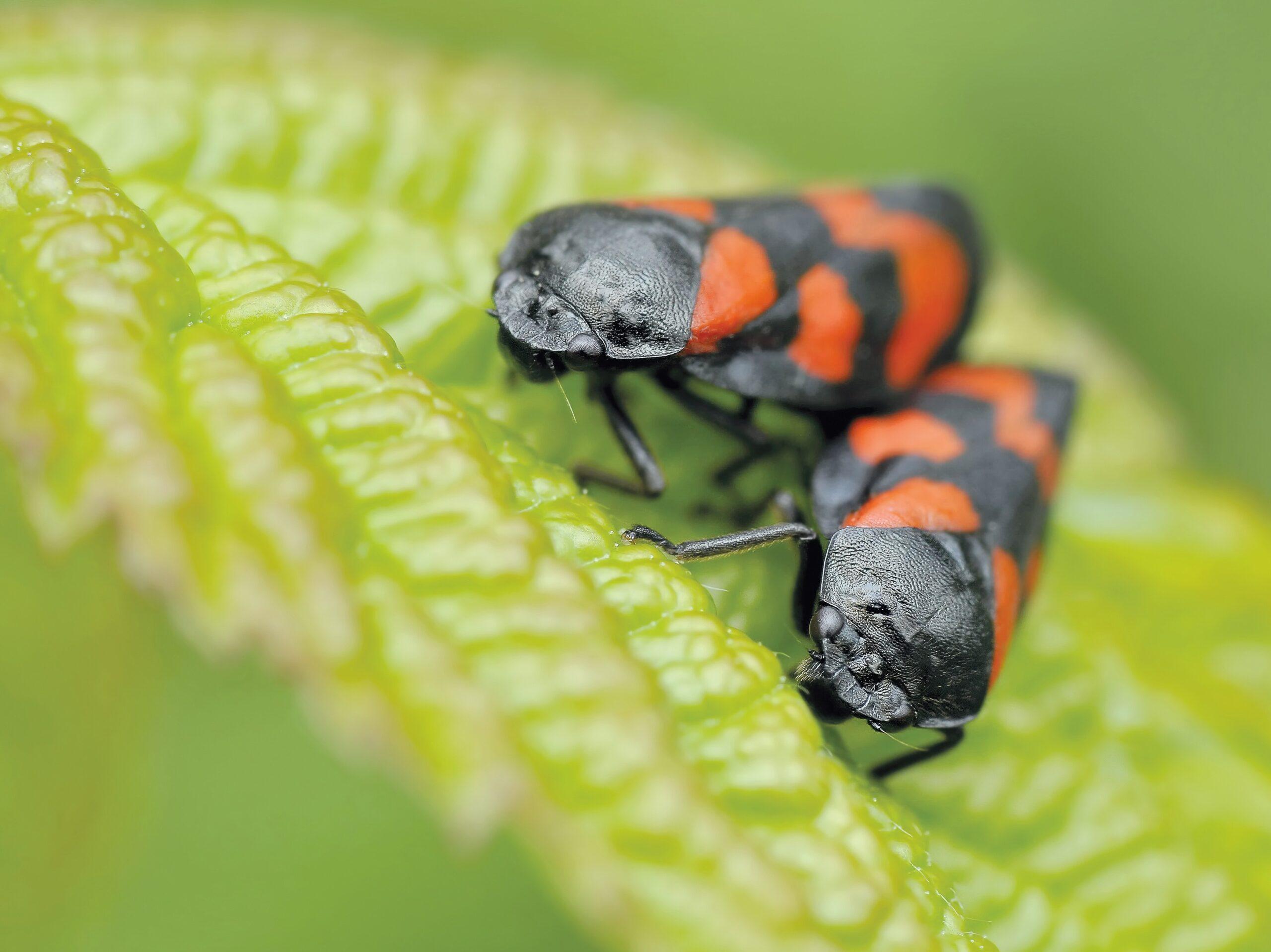 Rimedi naturali contro gli insetti: ecco le soluzioni