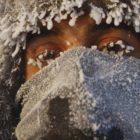 riscaldamento globale clima in siberia
