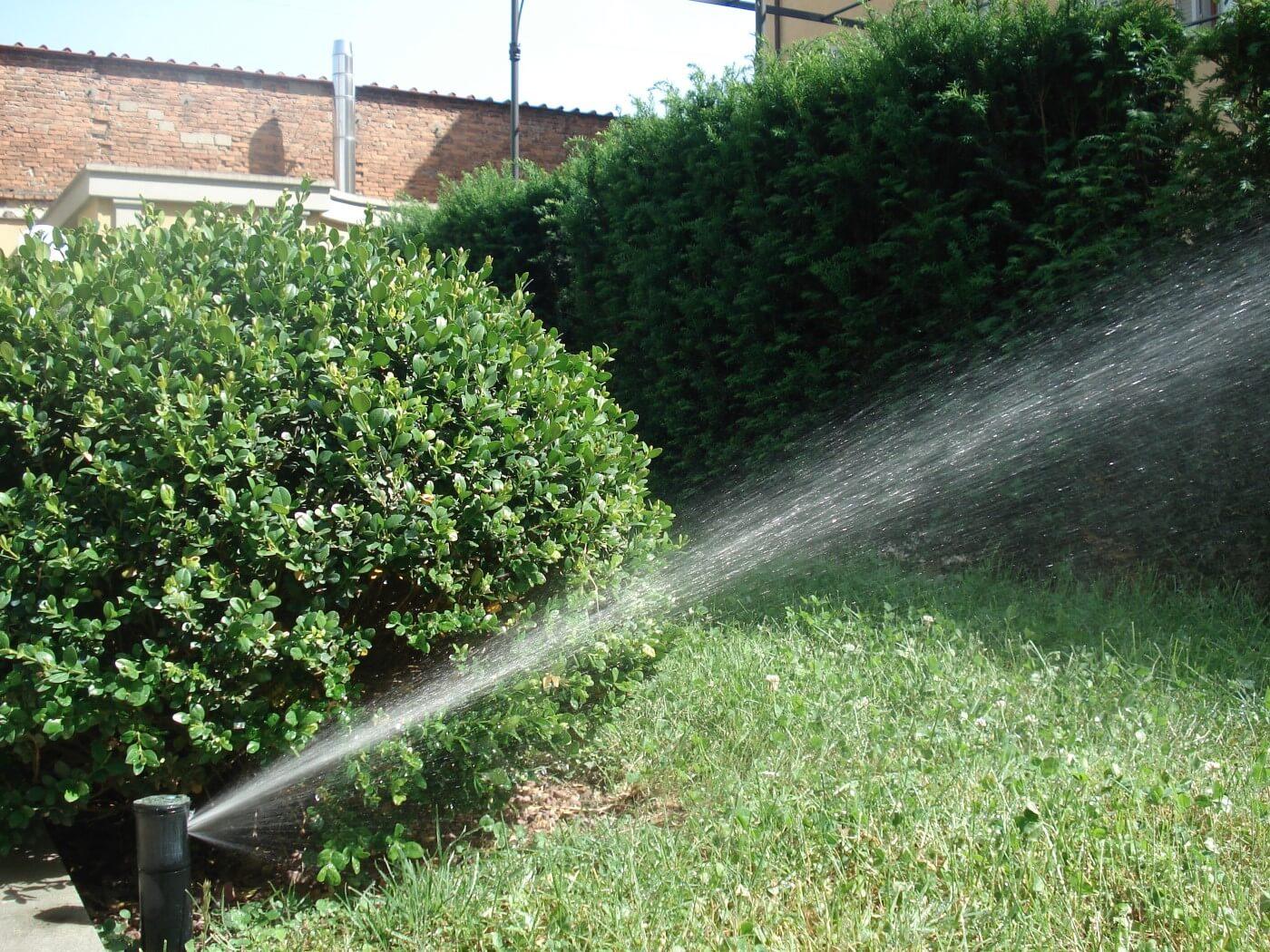 Siepi in giardino: consigli per cura e irrigazione