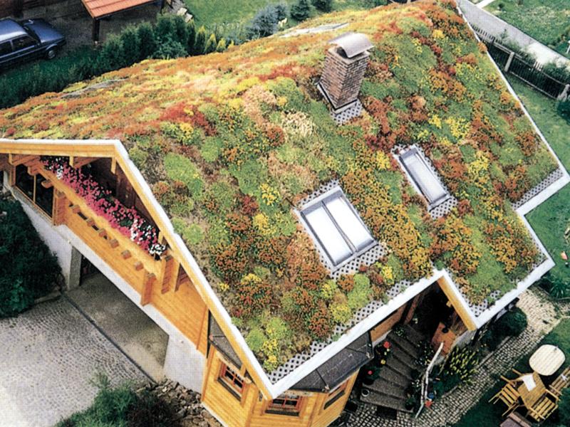 Tetti verdi: cosa sono e i loro benefici