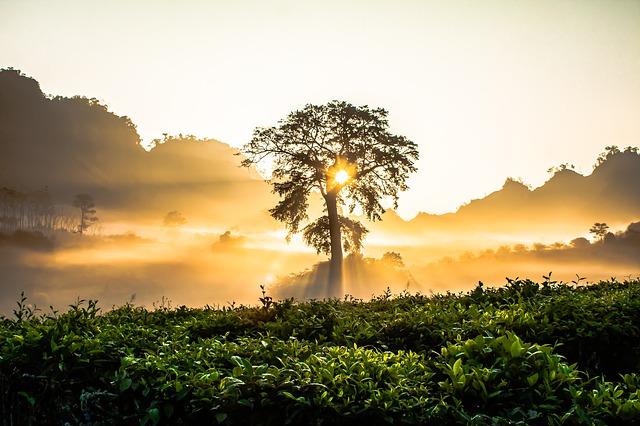 Piantare alberi per tutelare l'ambiente: il progetto Avery