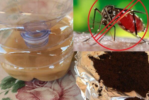 zanzare e rimedi naturali